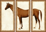 3 Piece Framed HorseTriptych by V.J. Coltison