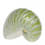 Key Lime Nautilus Shell