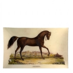 Arabian Stallion Rectangular Plate